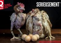 Analyse de l'action de Gaia Belgique contre les poules en cage de Quick